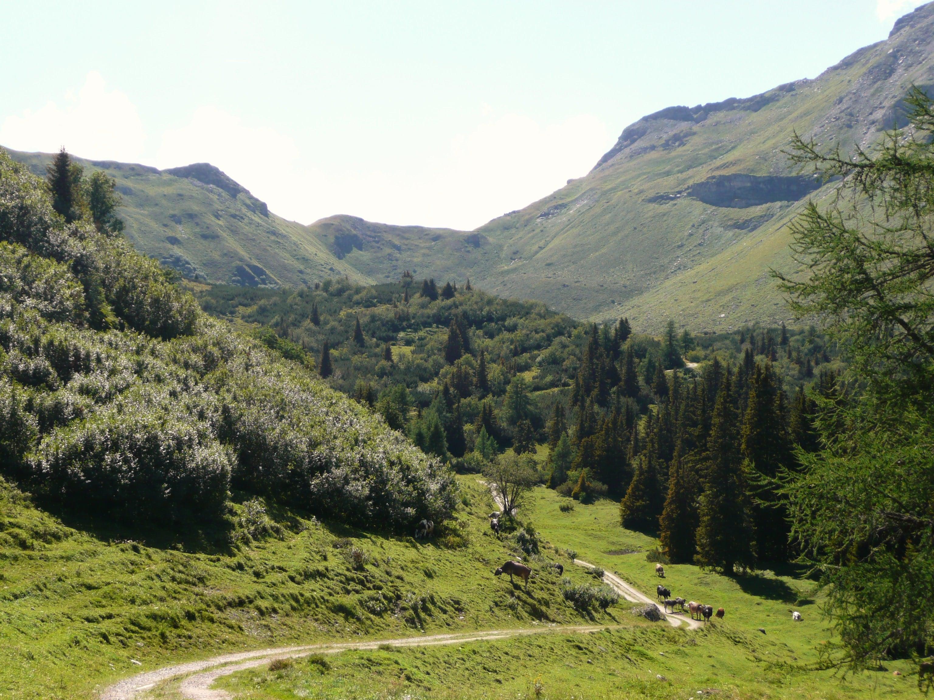 Die große Brennergrenzkammrunde: Mountainbike Italien