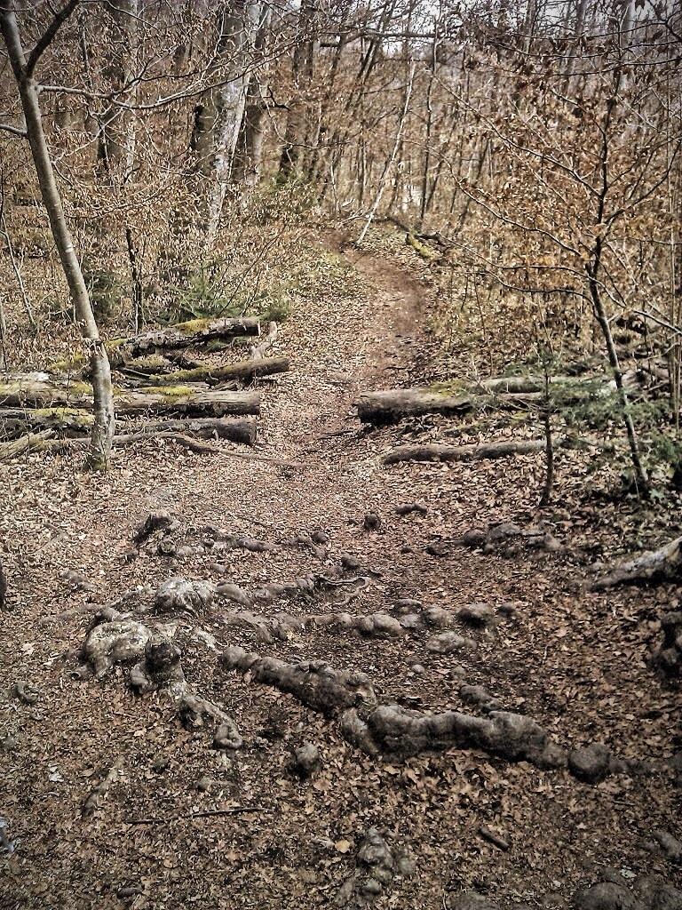 Leichte Trails an der Isar - ideal zum einfahren im Frühjahr