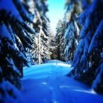 Winterwanderung Tegernsee: Zum Riedersteinhaus am Galaun bis Baumgartenschneid