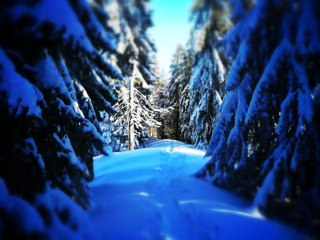 Wandern in Bayern: Zur Baumgartenschneid