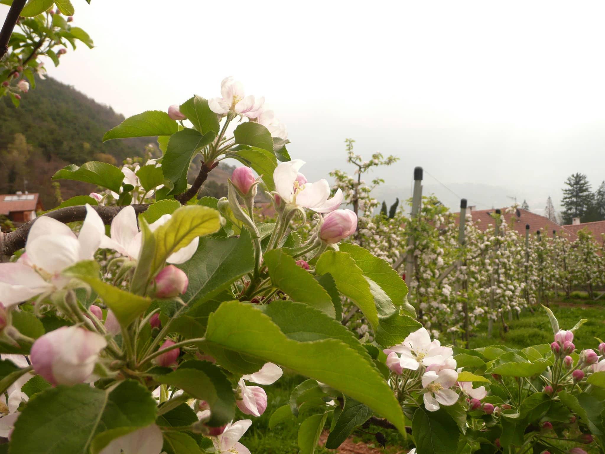 Wandern auf dem Algunder Waalweg im Vinschgau