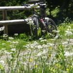 Kochel am See Wandern: Mountainbike in Kochel am See: Hinauf zur Orterer Alm