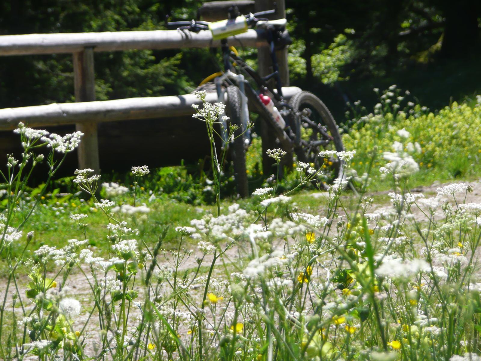 Kochel am See Wandern & Mountainbike