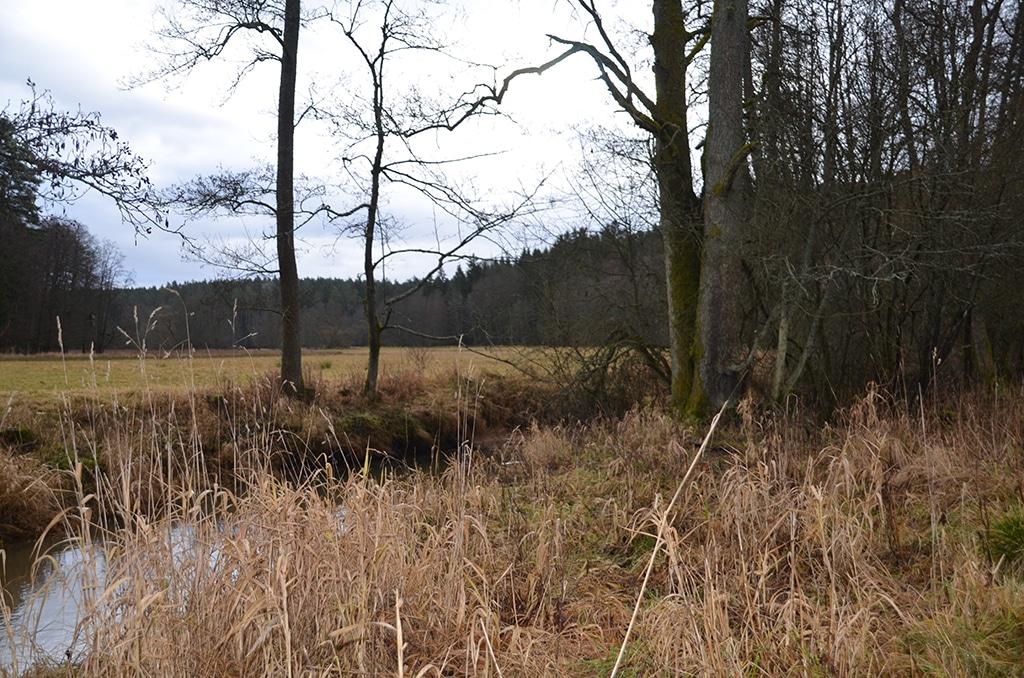 Wiesen und eine Fichtenlandschaft prägen den Veldensteiner Forst