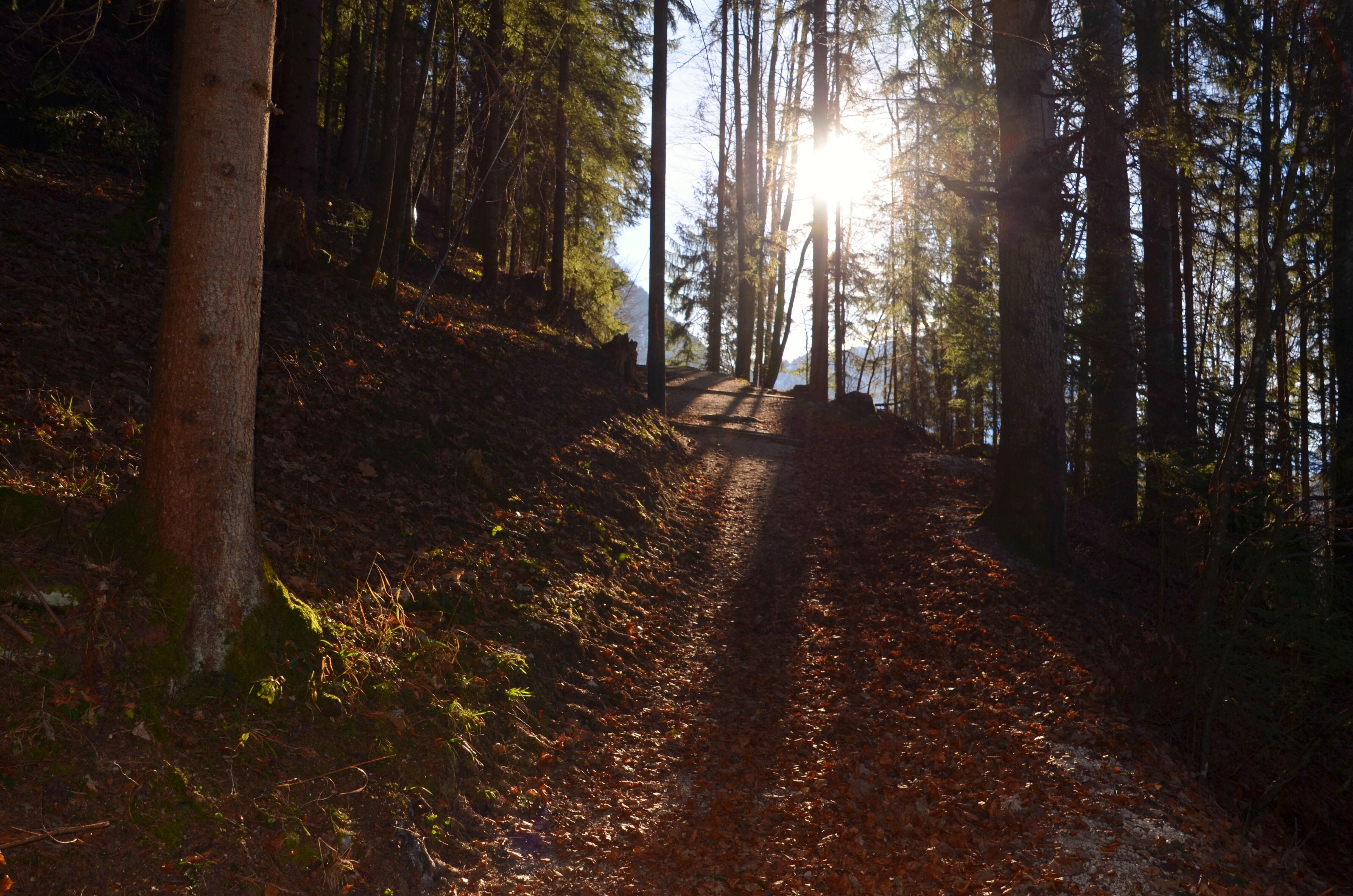 Car-von-Linde-Weg auf dem Obersalzberg: Höhenwanderung mit Blick auf Berchtesgaden
