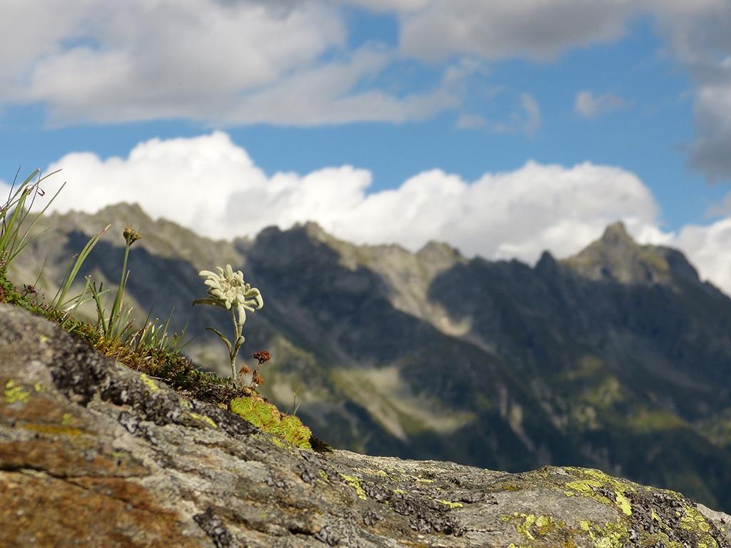 Unzählige Bergipfel und Almen laden zum wandern im Zillertal ein