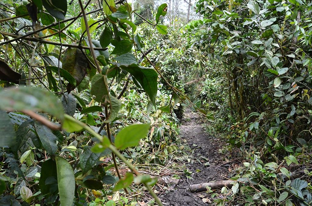 Der Lloa Mindo Trail in Ecuador: Trekking durch verschieden Klimazonen in Ecuador