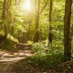 Urlaub Eifel: Erholung im im Natur- und Sternenpark