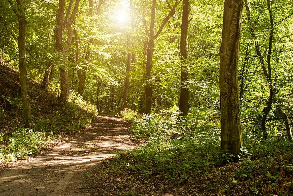 Wandern Odenwald: Ein Überblick über die Region