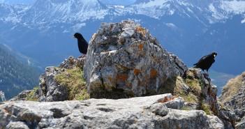 Aggenstein Pfronten: Gipfelpanorama vom Aggenstein im Tannheimer Tal