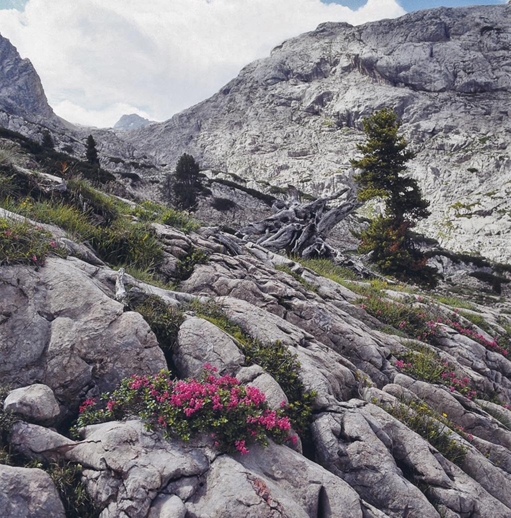 Steinernes Meer Nationalpark Berchtesgaden