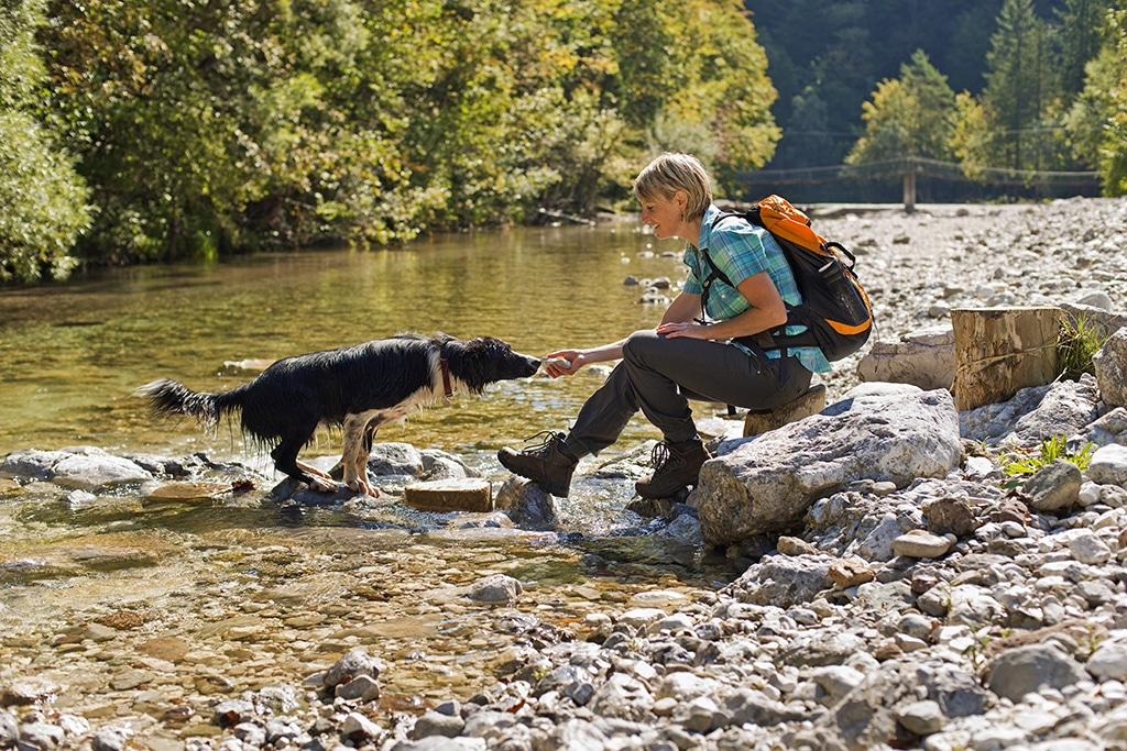 Ferien mit Hund -was gilt es zu beachten?