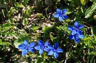 Alpenblumen bestimmen welche blumen findet man im fr hjahr im berg - Lila blumen bestimmen ...