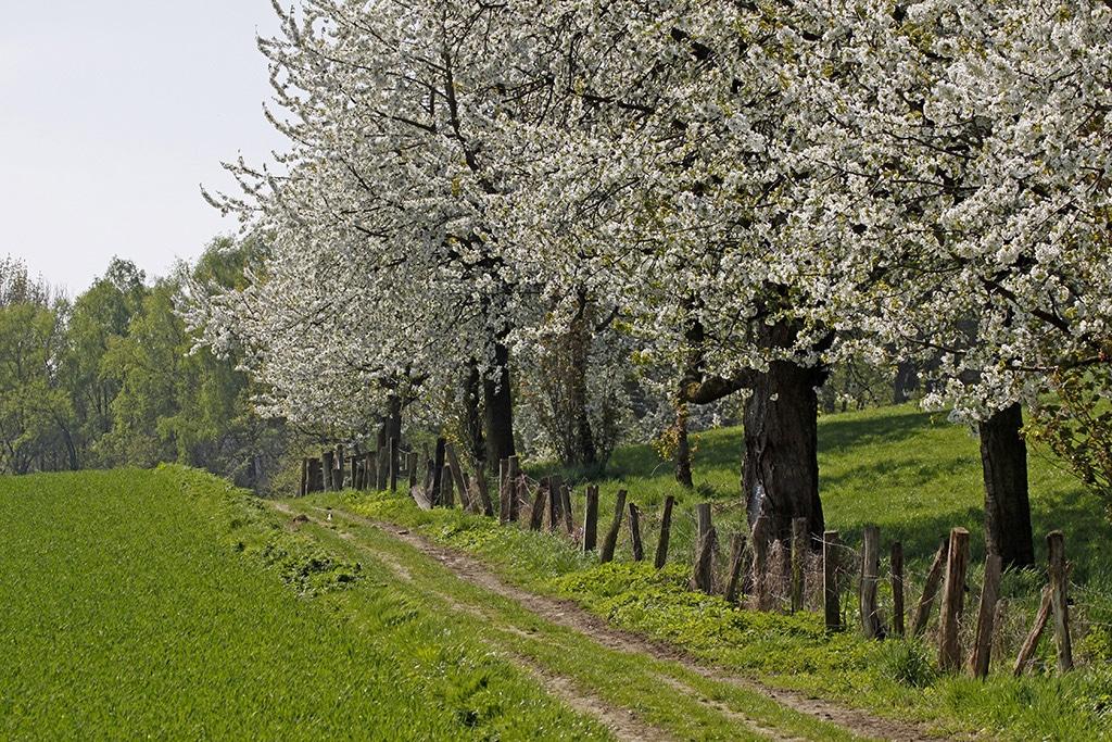 Weserbergland im Frühjahr