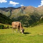 Im Vinschgau Wandern – Die schönsten bewirtschafteten Milchalmen im Vinschgau