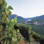 Weinviertel Österreich – familienfreundliches Radwegenetz zwischen malerischen Weingärten