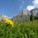 Wandern am Hochkönig – geheimnisvolle Heilkräuter und majestätische Gipfeltouren