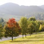 Waldviertel Österreich – die raue Schönheit in Niederösterreich