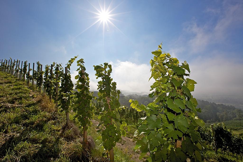 Kärnten Lavanttal: Weinbau in Wolfsberg