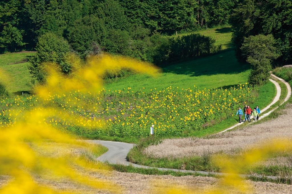 Fränkische Schweiz Wandern