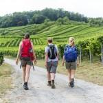 Das Heilbronner Land – Wandern, Wein und Wellnes