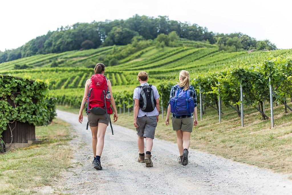 Heilbronner Land Wandern