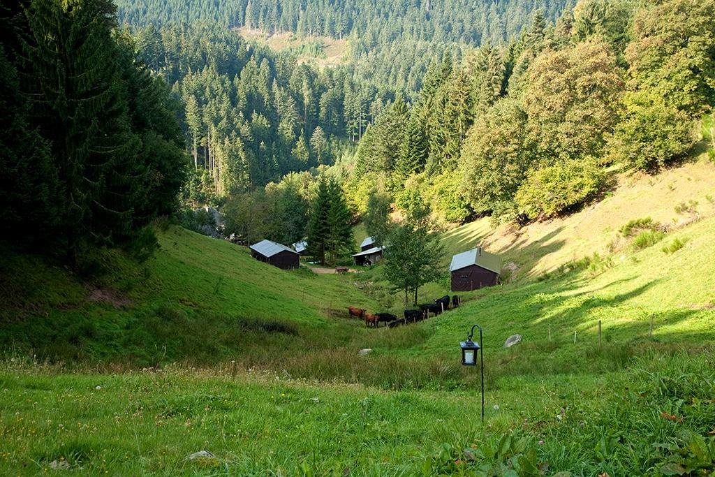 Urlaub in Schwarzwald