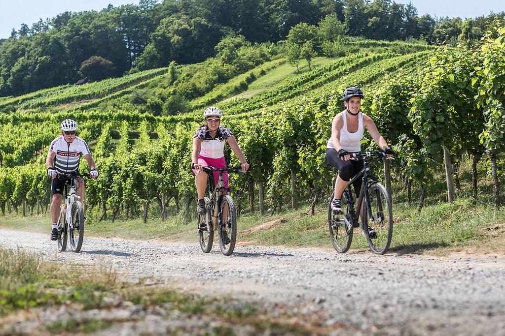 Der Württemberger Weinradweg