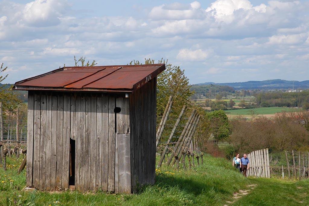 Radfahren Kaiserstuhl - Blick in den Kaiserstuhl bei Gottenheim
