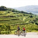 Von der Kaiser-Tour bis zur Tuniberg-Runde: Eine Auswahl an Radtouren Kaiserstuhl