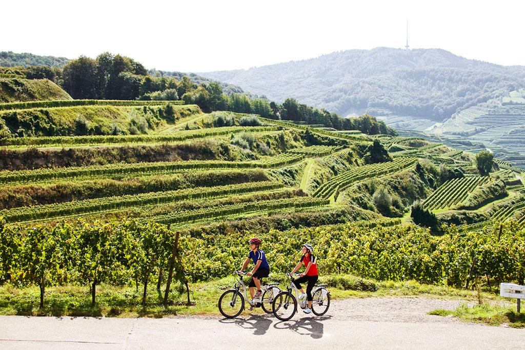 Radtouren Kaiserstuhl
