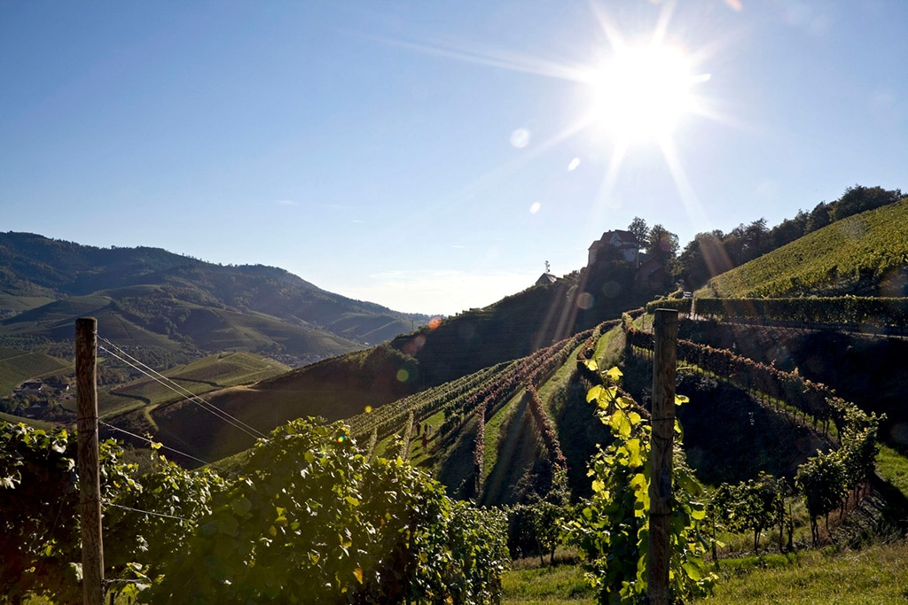 Badischer Wein und die Badische Weinstraße - von der Sonne verwöhnt (c) Badischer Wein GmbH