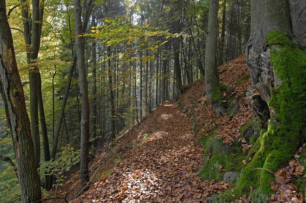 Elendsklam und Bruchmühlbach in Naturpark Pfälzerwald