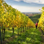 Badische Weinstraße – Genuss erfahren zwischen Schwarzwald, Rhein und Reben