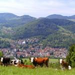 Der Naturpark Schwarzwald – wilde Natur und einzigartige Naturlandschaft