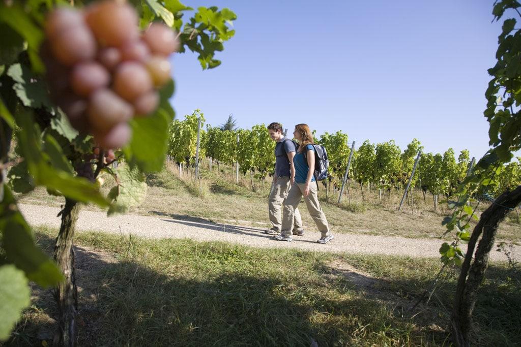 Der Weinsteig im Naturpark Pfälzerwald