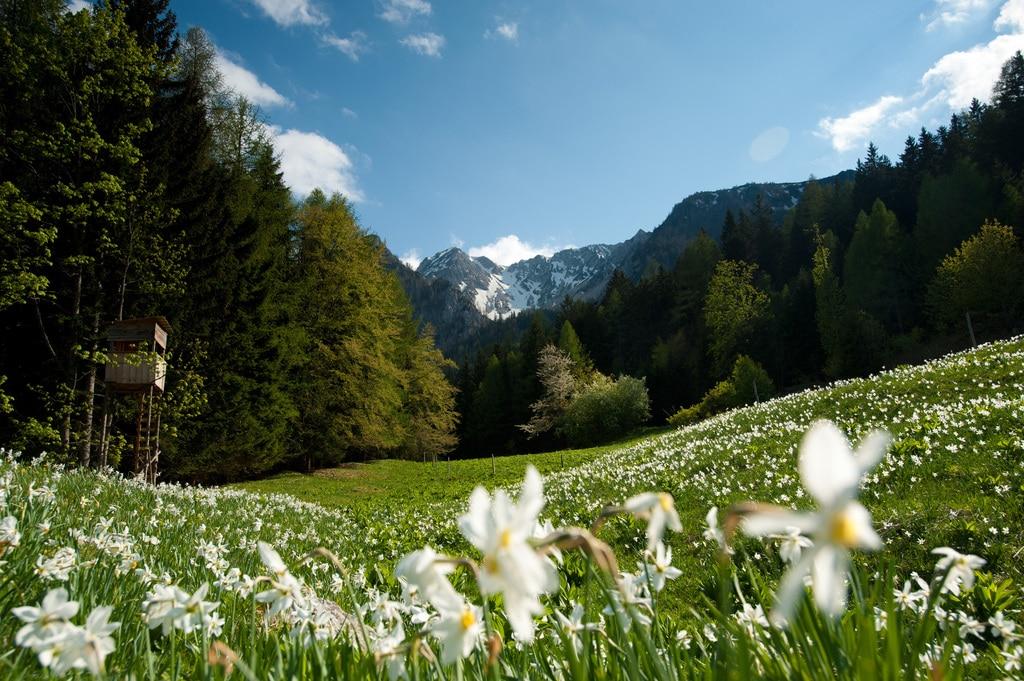 Ferienregion Carnica Rosental