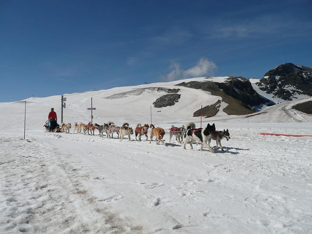 Husky Glacier 3000