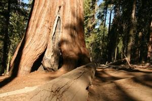 USA Wandern Redwood