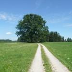 Radtouren Bayern: Rund um den Enzenauer Berg