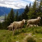 Wandern in Osttirol: Zur Roaner Alm