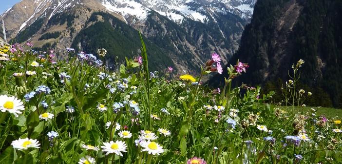 Wandern in den Lechtaler Alpen in Tirol