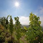 Das Lavanttal Kärnten – das Paradies Kärntens