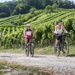 Der Württemberger Weinradweg – Radfahren auf den Spuren der Württemberger Weine