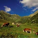 Die Via Alpina – Wandern über den gesamten Alpenbogen
