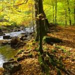 Nationalpark Hunsrück – Natur- und Kulturschatz